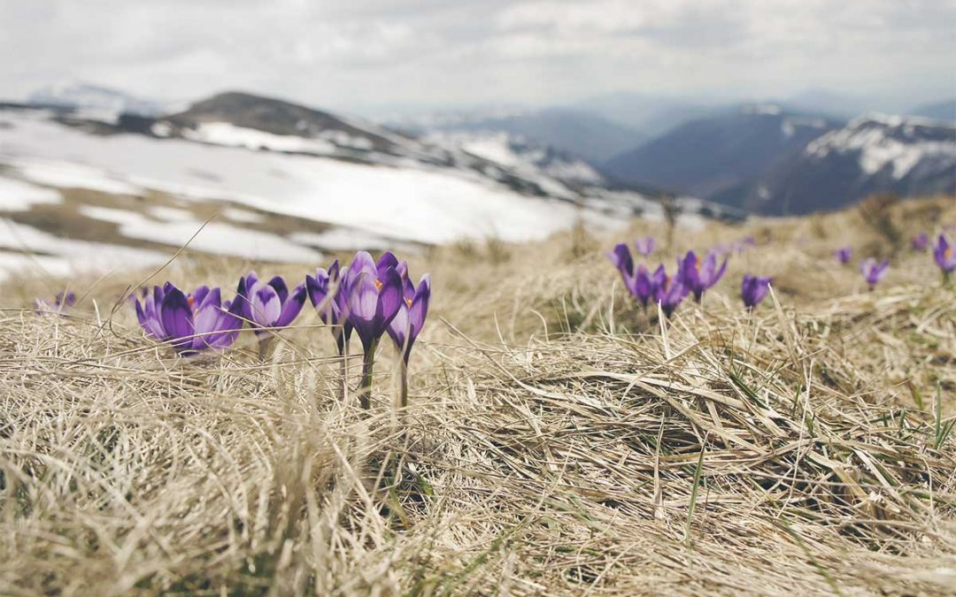 Eclosión primaveral