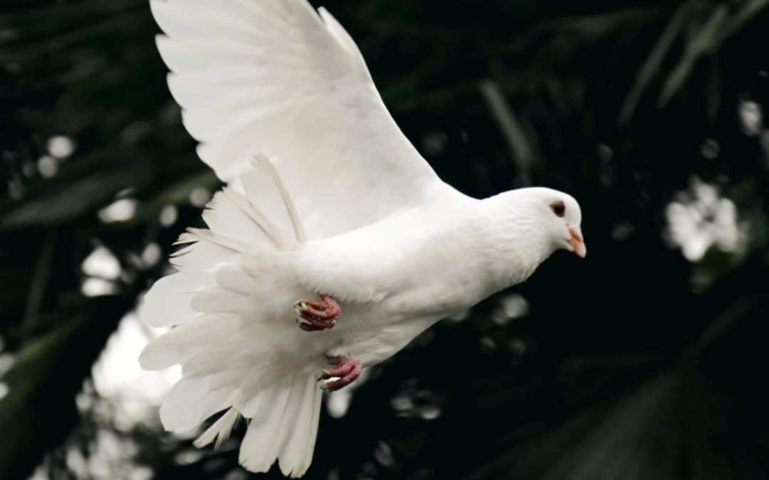 The Holy Spirit – God lives in us